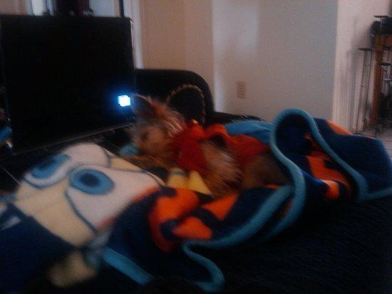 Pip sleeps