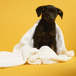 6 Petsolutions For a Fresh, Fun New Year