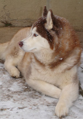 Are You Familiar With Snow Nose?
