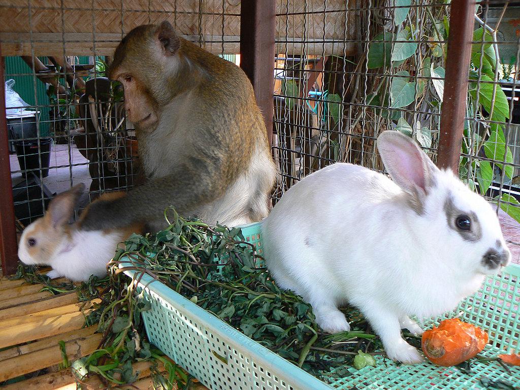Bunny Bundles of Joy!