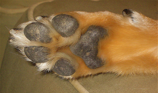 Pet Peeves: Can I Put My Moisturizer on My Dogs' Paws?