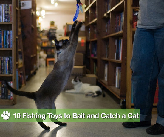 Go fish 10 toys to bait and catch a cat popsugar pets for Cats go fishing