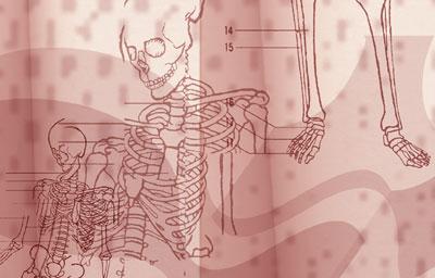 Quiz: Anatomy 101
