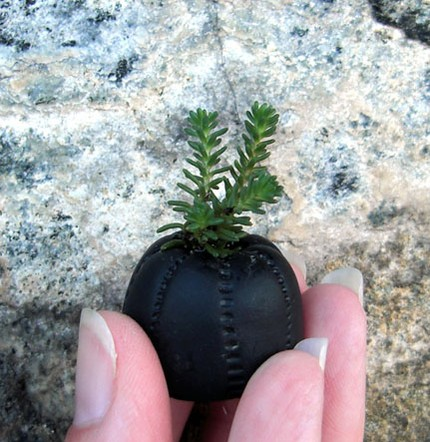 Etsy Finds:  Add Some Greenery to Your Life