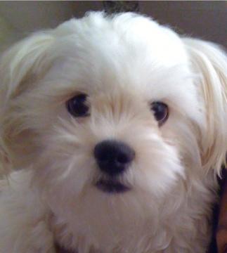 My baby Chauncey...