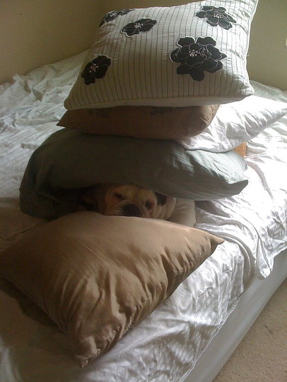the princess and the pea.