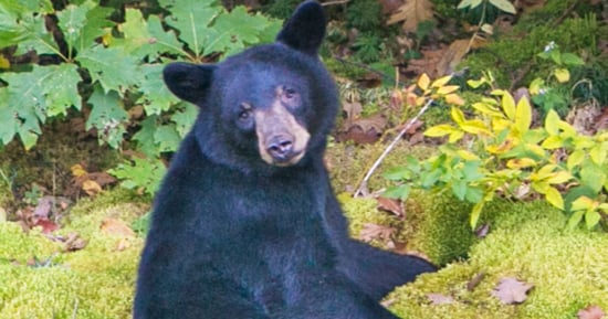 Canadian Man Punches Black Bear in the Face, Walks Away With Only Scratches