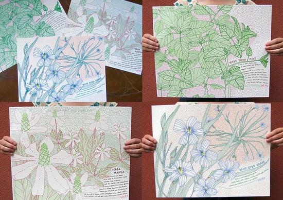 Jill Bliss Native Herbs Print Set
