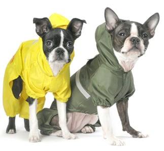 Bare Bones: Raincoat Roundup