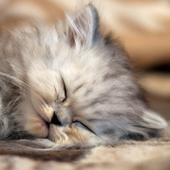 Trivia About Persian Cats