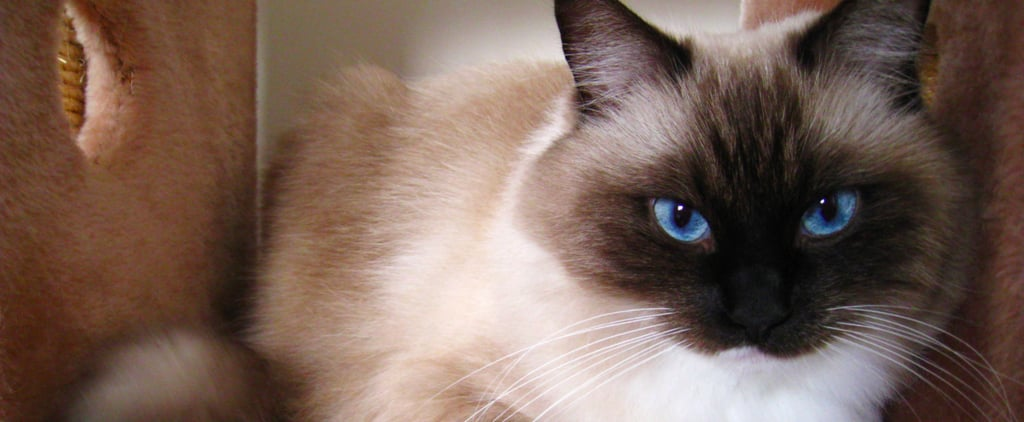 20 Most Popular Cat Names This Year