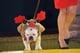 It's Rudolph!