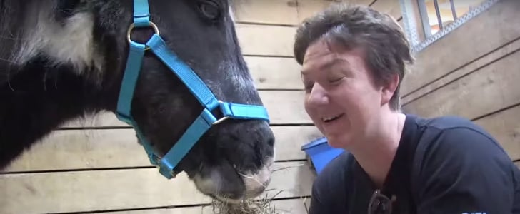 Disabled Horse Given Beautiful New Country Home
