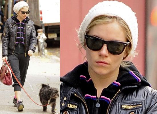 Gallery of Photos of Sienna Miller Walking Her Dog in Manhattan, Is Sienna Miller Seeing Jude Law Again?
