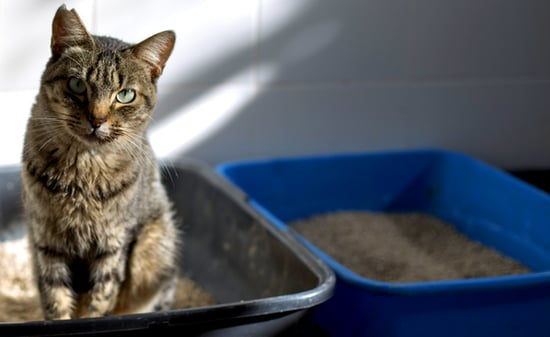 5 Behavior Changes Caused By Moving My Cats' Litter Boxes