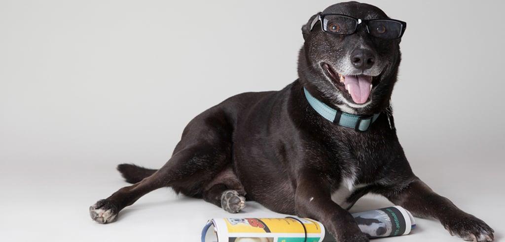 Smart Dogs Wearing Glasses