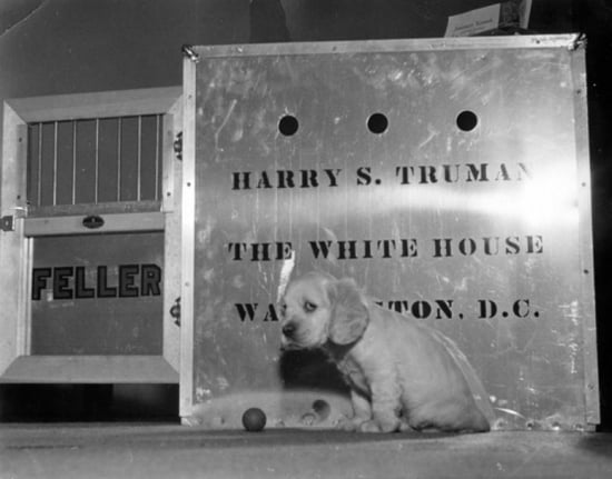 Wee Cocker Spaniel pup Feller was a gift to President Harry S. Truman and his family. Source: National Archives