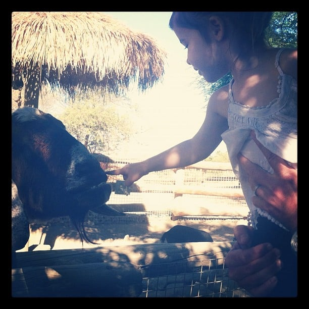 Harper Smith fed the animals at the zoo. Source: Instagram user tathiessen