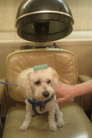 Pet Pic of the Day: Pampered Pooch