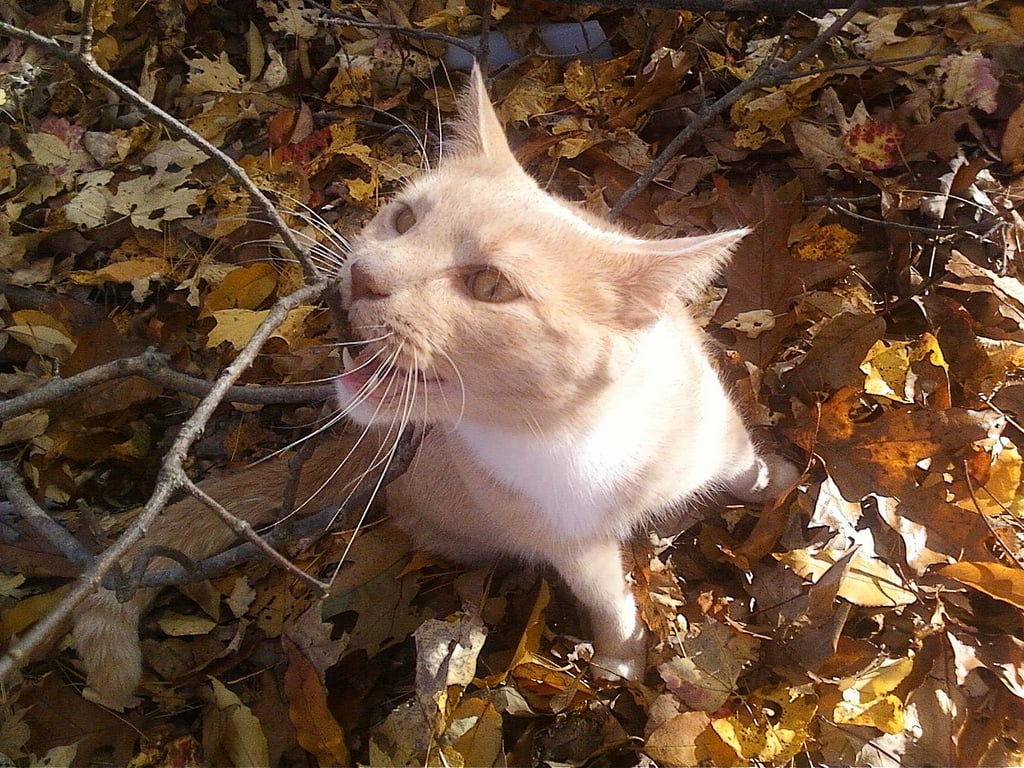 Leaf exploring is one itchy business! Source: Flickr user nicolee123nd