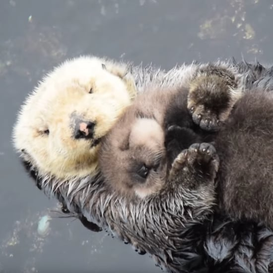 Mom Holding Baby Otter | Video