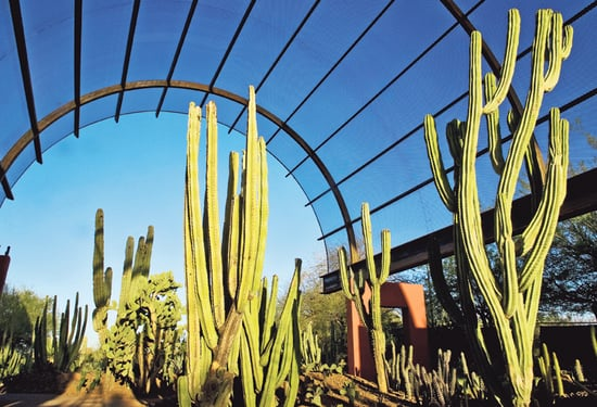 In the News:  A Makeover For Phoenix's Botanical Garden