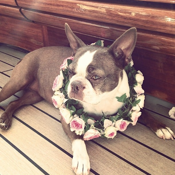 Even Daphnee the dog got into the spirit! Source: Instagram user noorfares