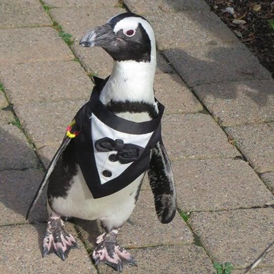 Penguins in Halloween Costumes
