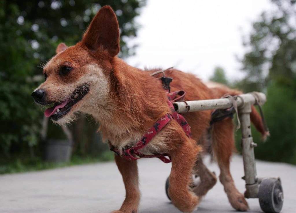 Special Needs Animals Have Special Needs