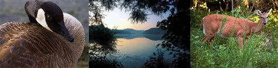 Out and About: Tennessee's Radnor Lake