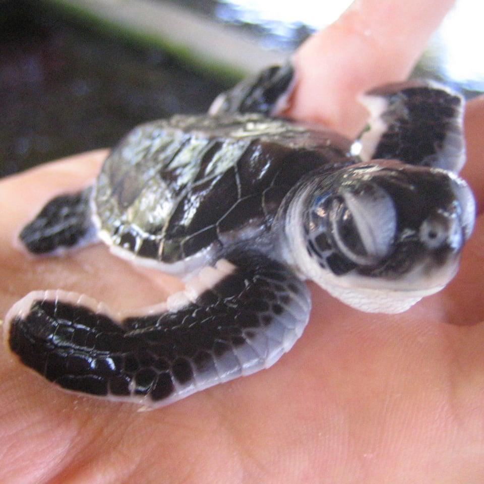 I'm tortoise-ly adorable. Source: Flickr user Aiden Jones