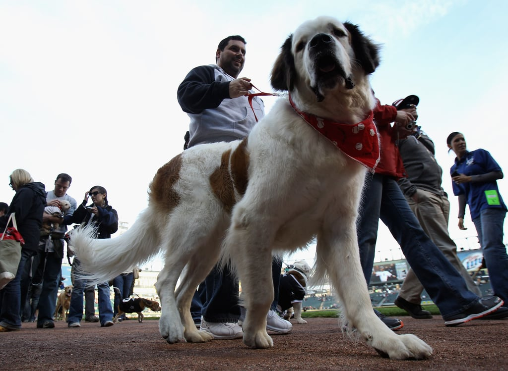 Take Your Pup to the Ballgame