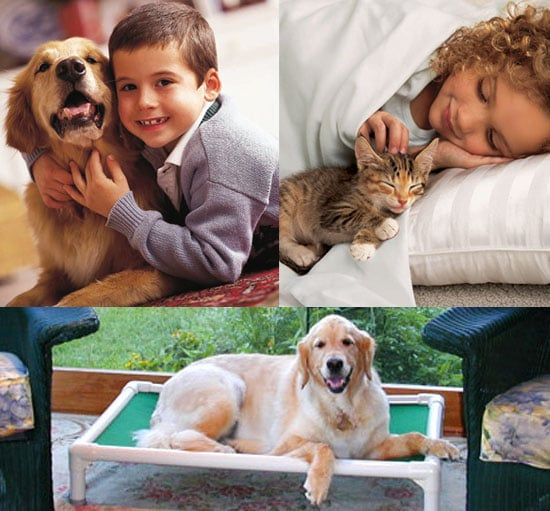 Win an Iams Package For Your Cat or Dog and Two Kuranda Beds For Shelter Pets 2009-02-25 12:45:04