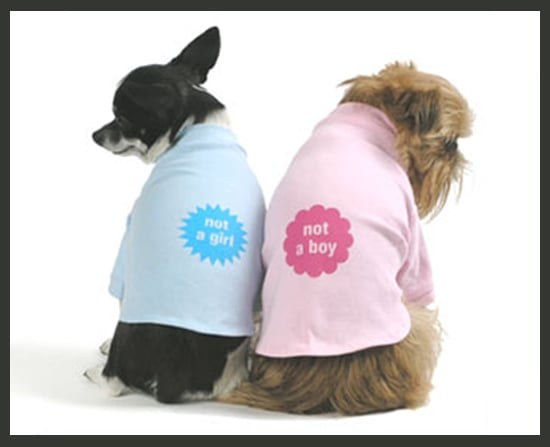 Not a Girl and Not a Boy Shirts For Dogs