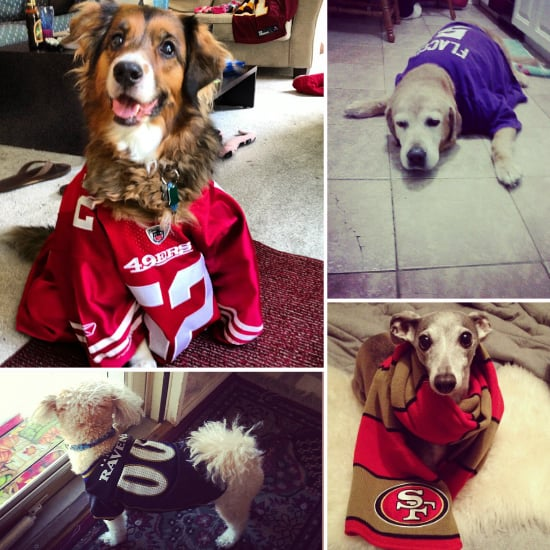 Smells Like Team Spirit (and Dog Breath!) This Super Bowl