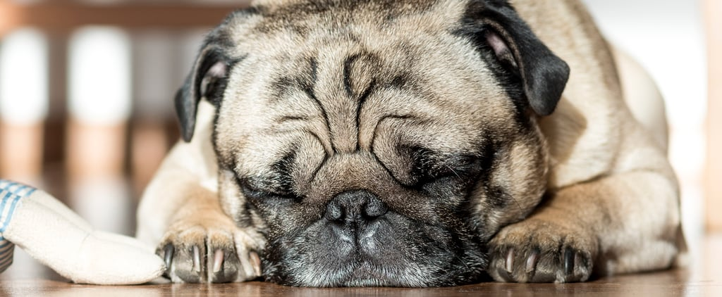 5 Weird Dog Behaviors Even Dog-Lovers Have to See to Believe