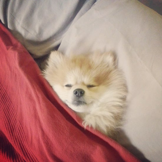 Cute Pets Sleeping | Pictures