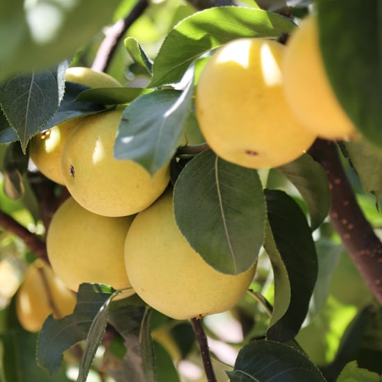 Fruit Gardening Guide
