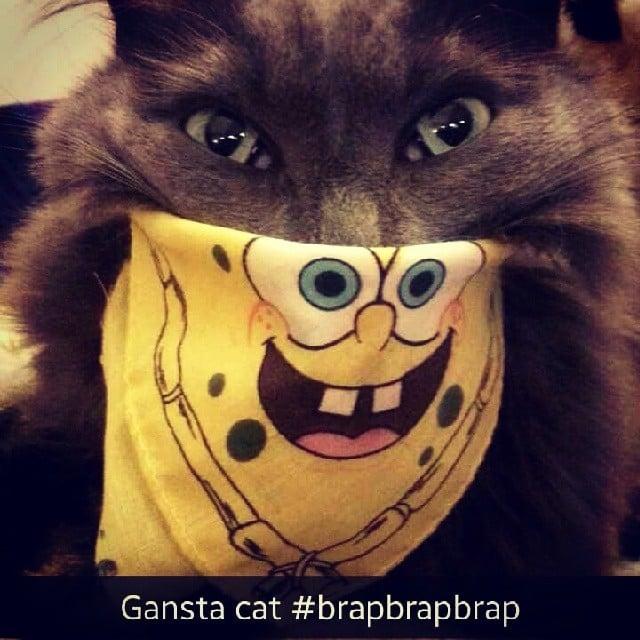 Gangsta cat . . . with a Spongebob handkerchief.  Source: Instagram user taylorsamis