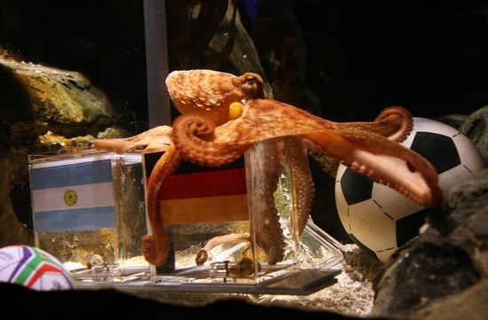 Octopus Predicts Germany the Quarterfinal World Cup Winner in Germany