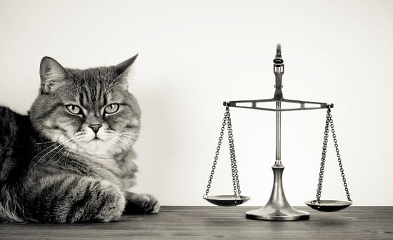5 Reasons Why My Cat Would Take Me to Small Claims Court