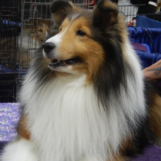 Backstage at the 2015 National Dog Show