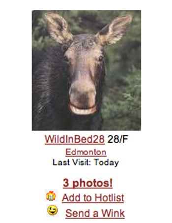 Adult Moosefinder Dating Site