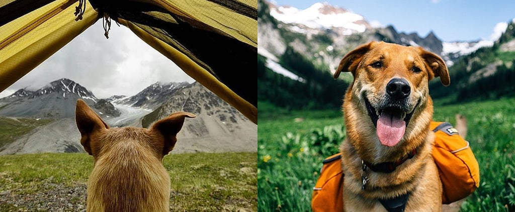 16 Breathtaking Photos of Dogs Camping