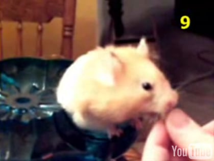 Hamster Can Put Away The Cheerios!