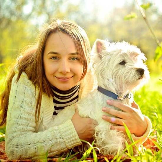 Get to Know the West Highland White Terrier: More Than Just Cuteness and Fluff