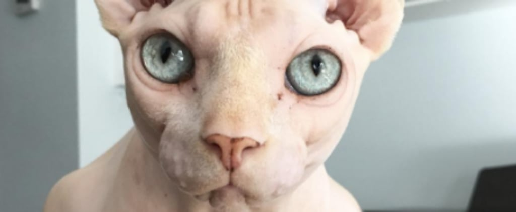 15 Reasons to Love Sphynx Cats
