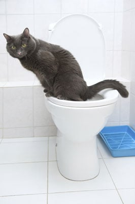 How Long Did It Take to Potty Train Your Pet?