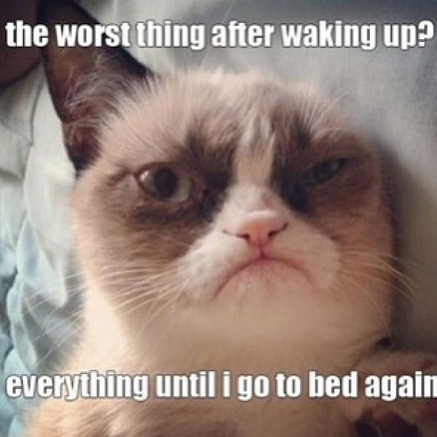 Not a Morning Kitty