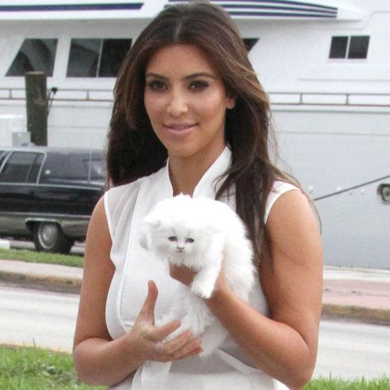 Celebrity Cat Ladies | Pictures